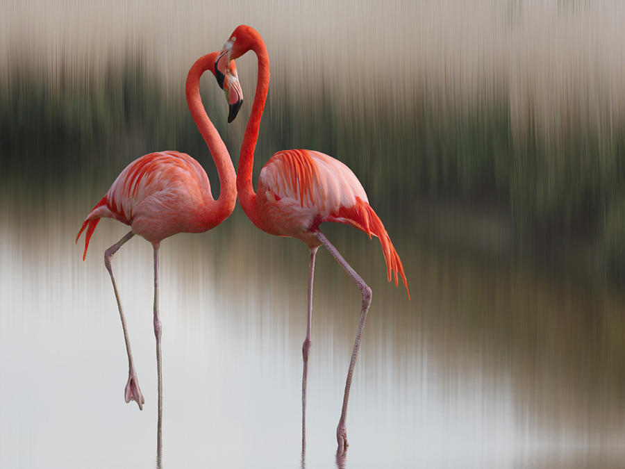 Flamingos Photograph  - Flamingos Fine Art Print