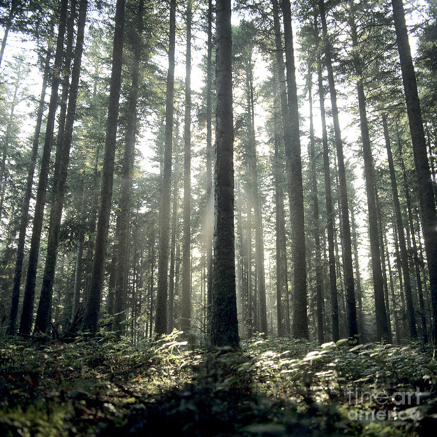 Forest Photograph  - Forest Fine Art Print