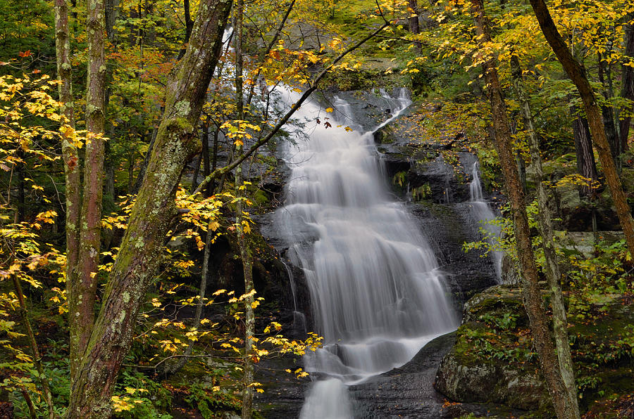 Forest Waterfall In Autumn Photograph  - Forest Waterfall In Autumn Fine Art Print