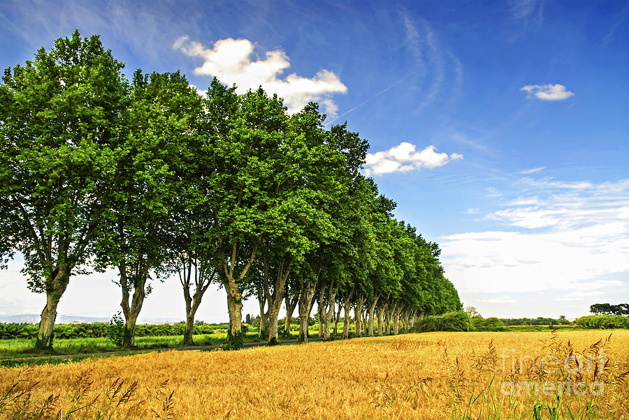 Road Photograph - French Country Road by Elena Elisseeva