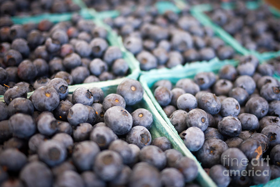 Fresh Blueberries Photograph  - Fresh Blueberries Fine Art Print