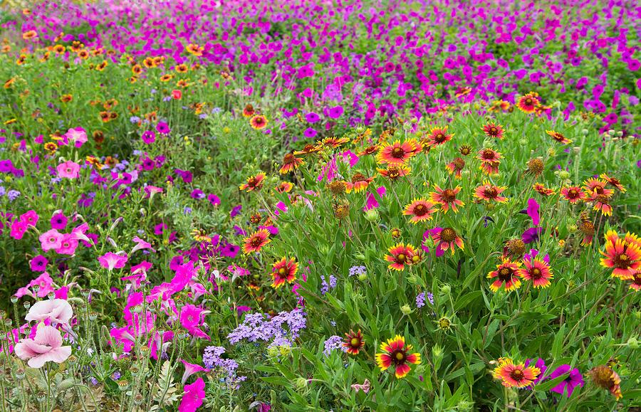 Texas Photograph - Garden Delight by Lynn Bauer