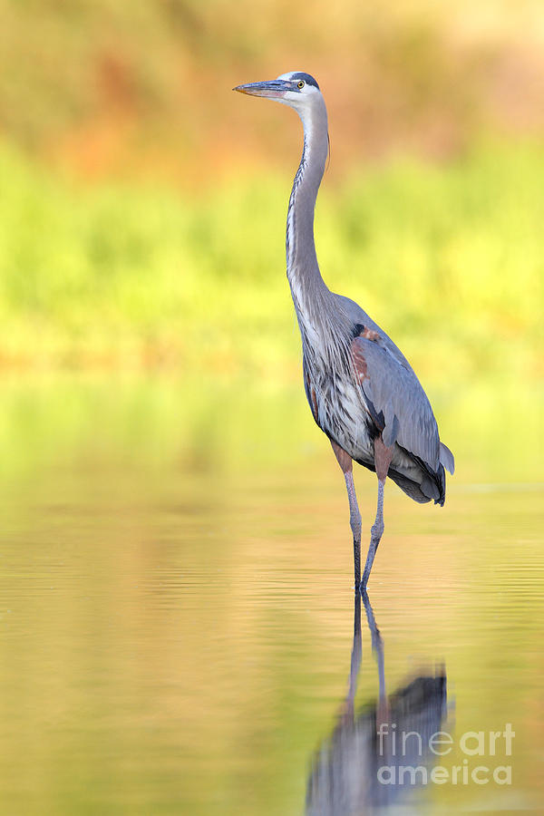 Gbh At First Light Photograph  - Gbh At First Light Fine Art Print