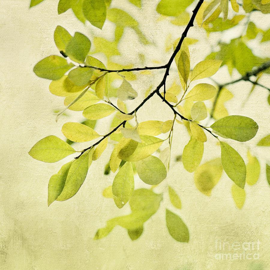 Green Foliage Series Photograph