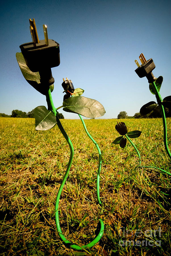Growing Green Energy Photograph  - Growing Green Energy Fine Art Print