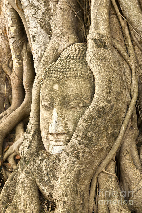 Head Of Buddha Ayutthaya Thailand Photograph