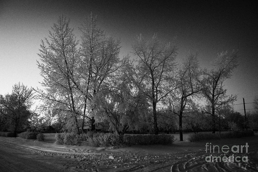 hoar frost covered trees on street in small rural village of Forget Saskatchewan Canada Photograph  - hoar frost covered trees on street in small rural village of Forget Saskatchewan Canada Fine Art Print