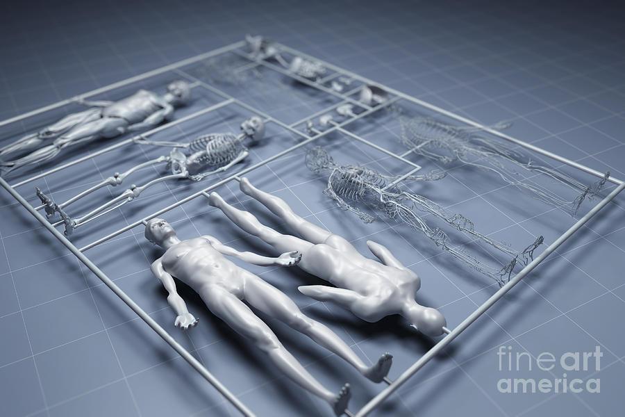 cloning human organs essay