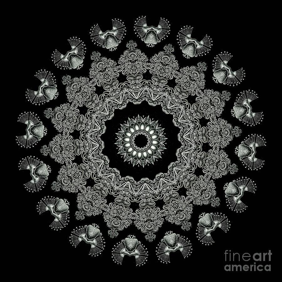Kaleidoscope Ernst Haeckl Sea Life Series Black And White Set 2 Photograph