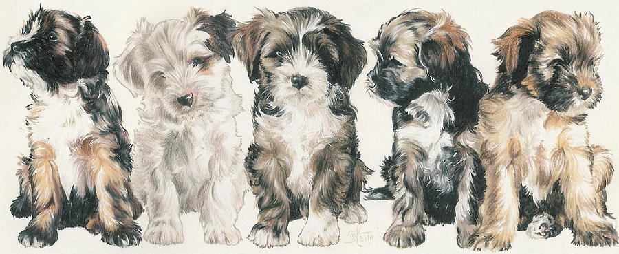Lhasa Apso Mixed Media