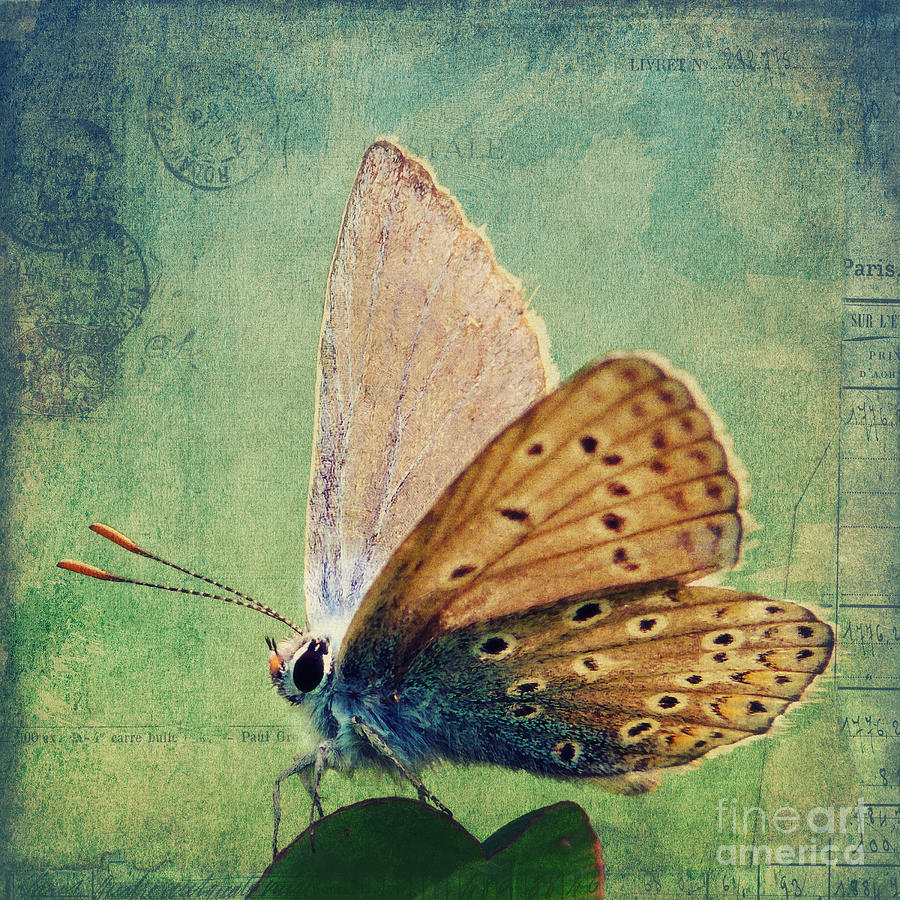 Little Butterfly Digital Art