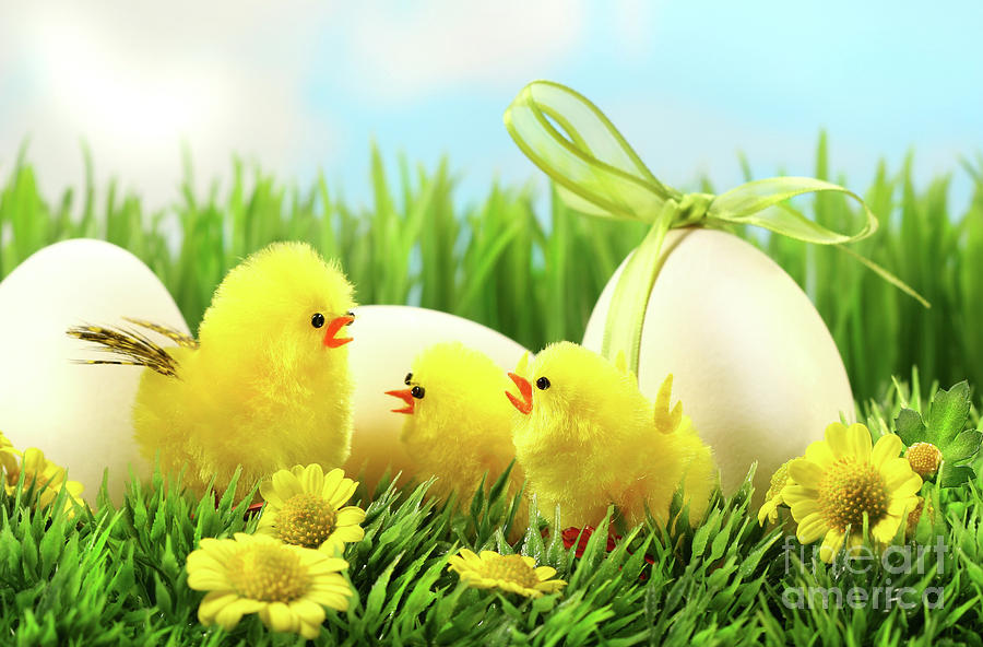 Little Yellow Easter Chicks In The Tall Grass  Photograph