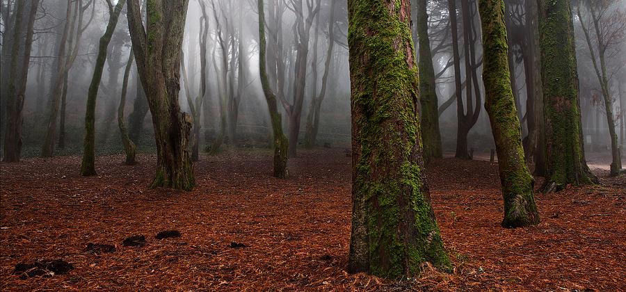Landscape Photograph - Magic Light by Jorge Maia