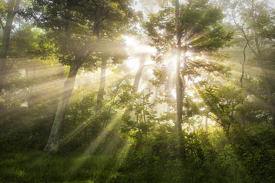 Morning Rays Photograph