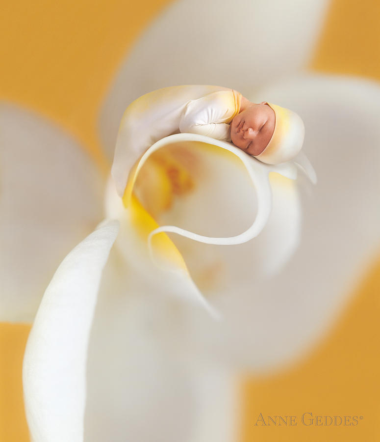 Nate In Moth Orchid Photograph  - Nate In Moth Orchid Fine Art Print