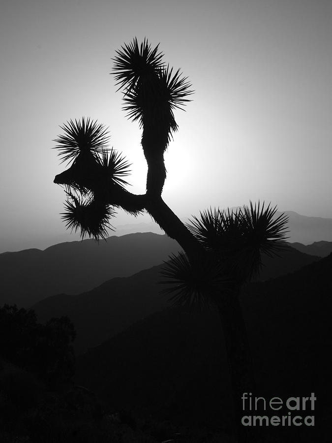 New photographic art print for sale joshua tree at sunset for Large photographic prints for sale