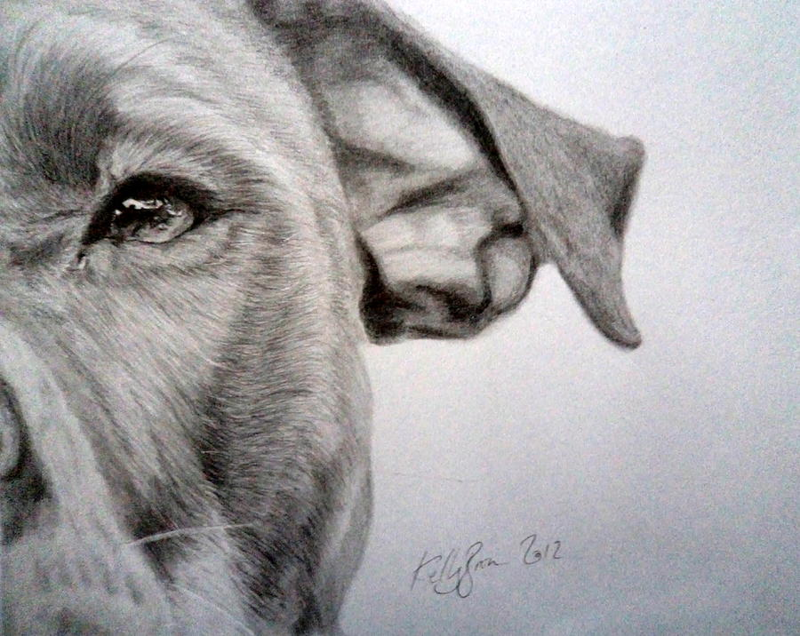 Pit-bull Drawing by Kelly Brown
