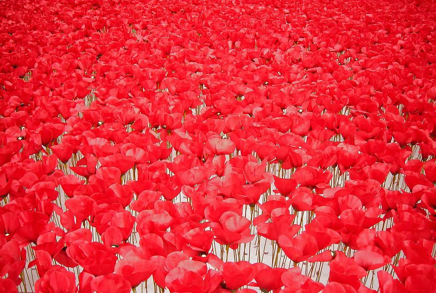 Europe Photograph - Poppy Meadow ... by Juergen Weiss