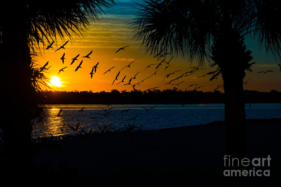 Port Charlotte Beach Sunset In January Photograph  - Port Charlotte Beach Sunset In January Fine Art Print