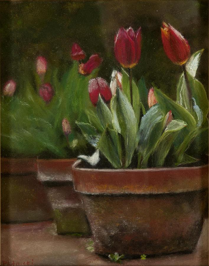 Moss On Pots Pastel - Potted Tulips by Cindy Plutnicki