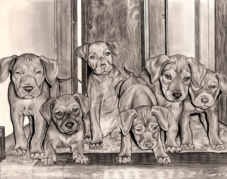 Puppies In The Hallway Drawing