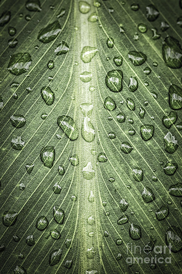 Raindrops On Green Leaf Photograph  - Raindrops On Green Leaf Fine Art Print