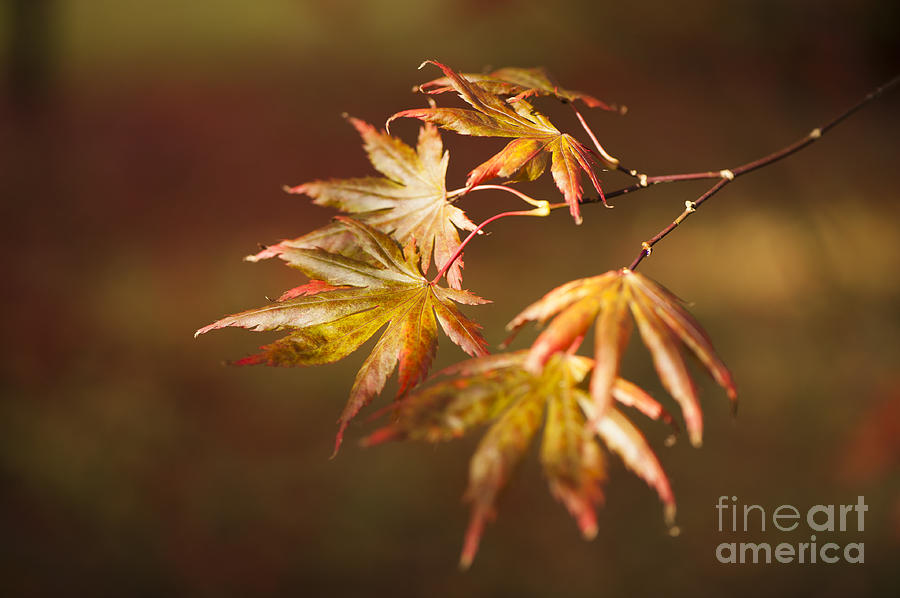 Reaching For The Sun Photograph  - Reaching For The Sun Fine Art Print