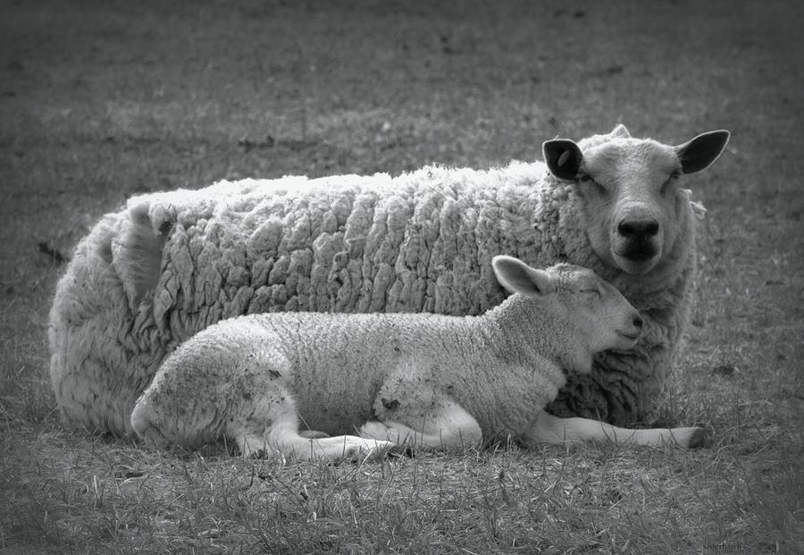 Animal Photograph - Safe by Kathy Bassett
