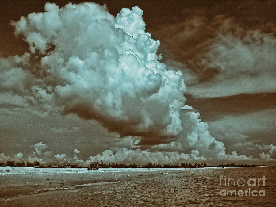 Sanibel In Sepia Photograph  - Sanibel In Sepia Fine Art Print