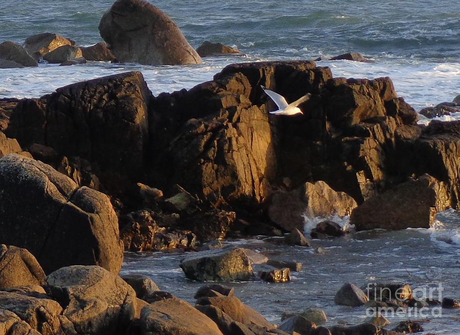 Seagull Landing Painting