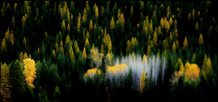 Trees Photograph - Shades Of Grey by Clint  Crawford