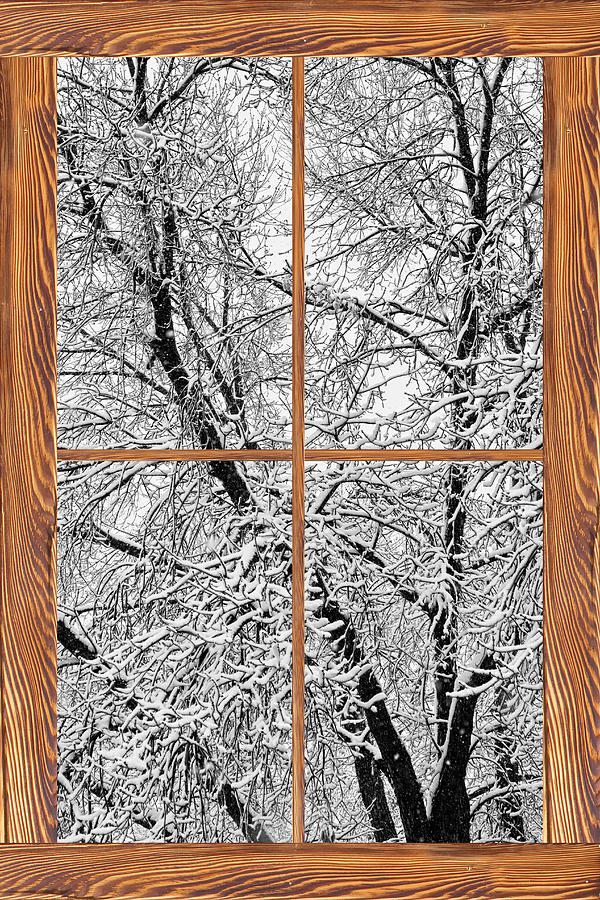 Snowy Tree Branches Barn Wood Picture Window Frame View Photograph