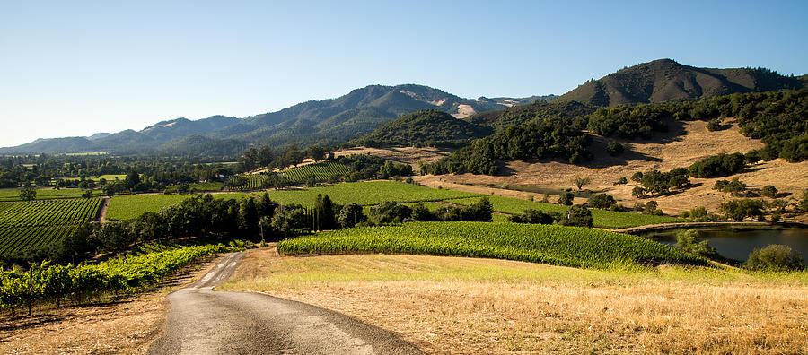 Sonoma Valley Photograph