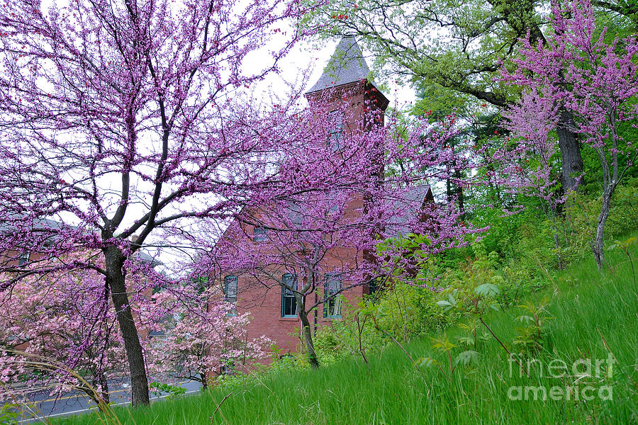 Spring Photograph - Spring Colors by Edward Sobuta