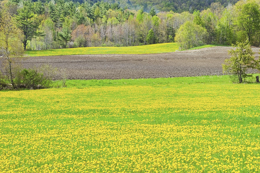Spring Photograph - Spring Farm Landscape With Dandelion Bloom In Maine by Keith Webber Jr