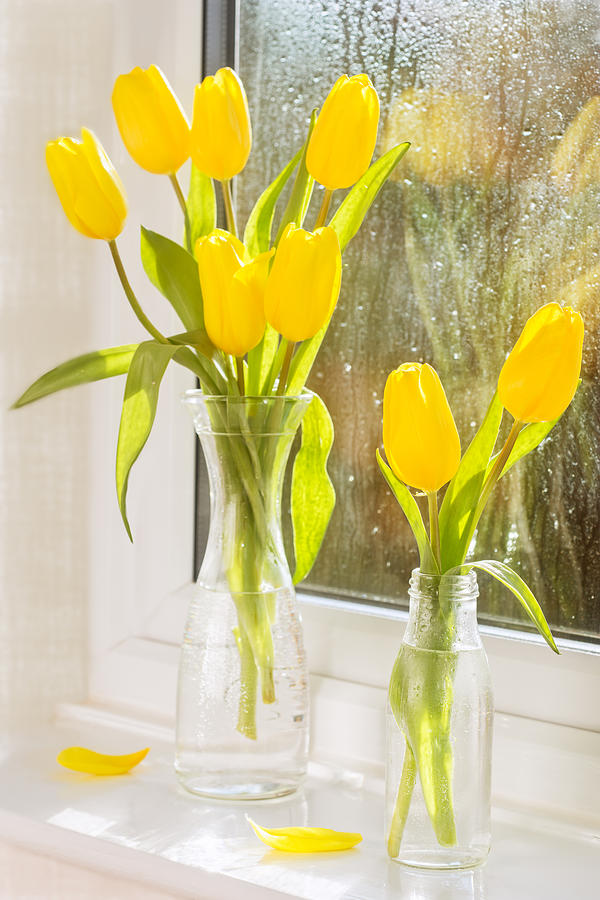 Spring Tulips Photograph