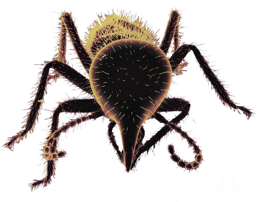 Termite Photograph - Termite Soldier by David M. Phillips