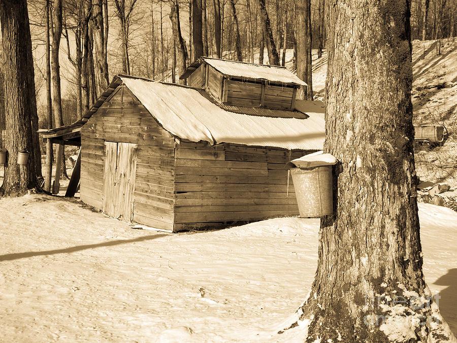 The Old Sugar Shack Photograph