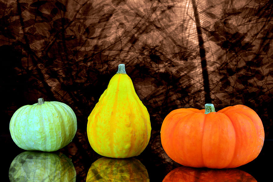 Abundance Arrangement Autumn Backgrounds Blank Celebration Circle Collection Curve Decoration Descriptive Event Fall Food Fruit Gourd Halloween Harvesting Holiday Husk Isolated Leaf Leaves Maple Nature November October Orange Pumpkin Season Sphere Squash Stem Thanksgiving Vegetable White Whole Yellow Photograph - Three Small Pumpkins  by Toppart Sweden