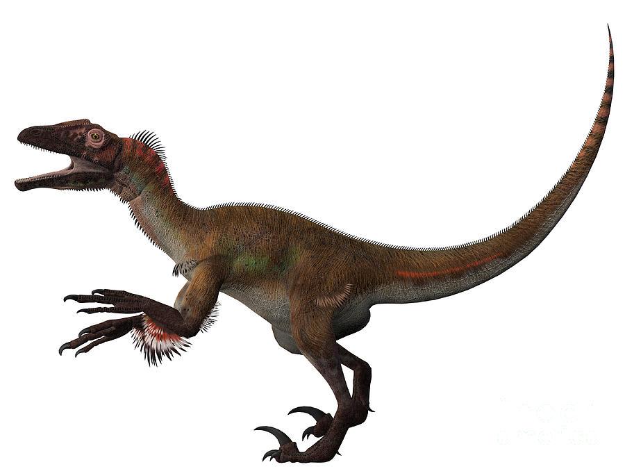 Carnotaurus Vs Giganot...