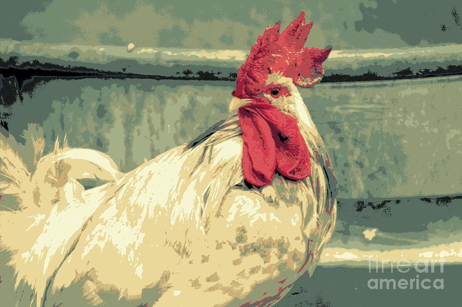 Rooster Photograph - What by Joe Jake Pratt