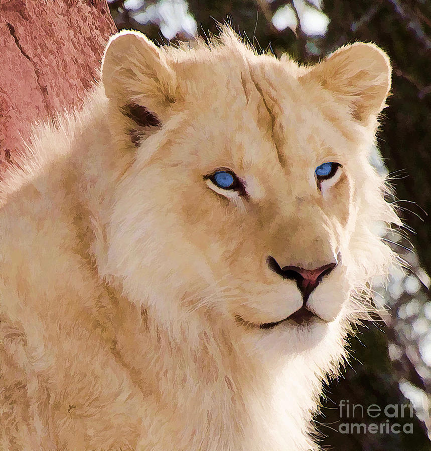 white lioness with blue eyes wwwpixsharkcom images