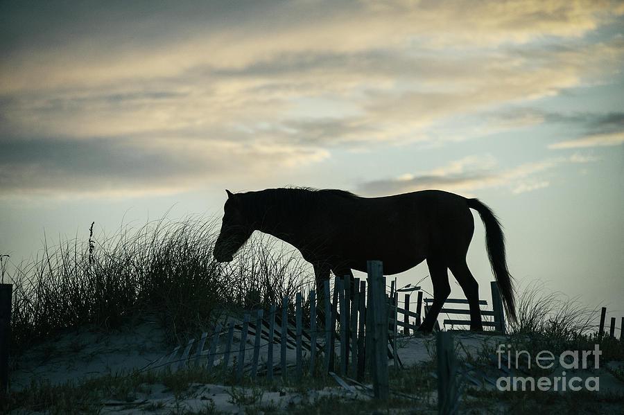 Wild Spanish Mustang Photograph