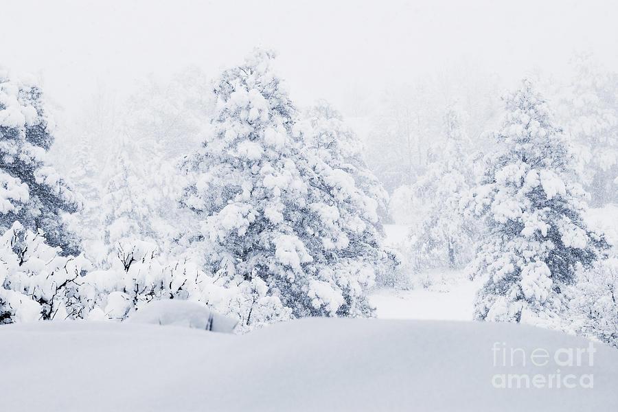 Winter Landscapes Photograph