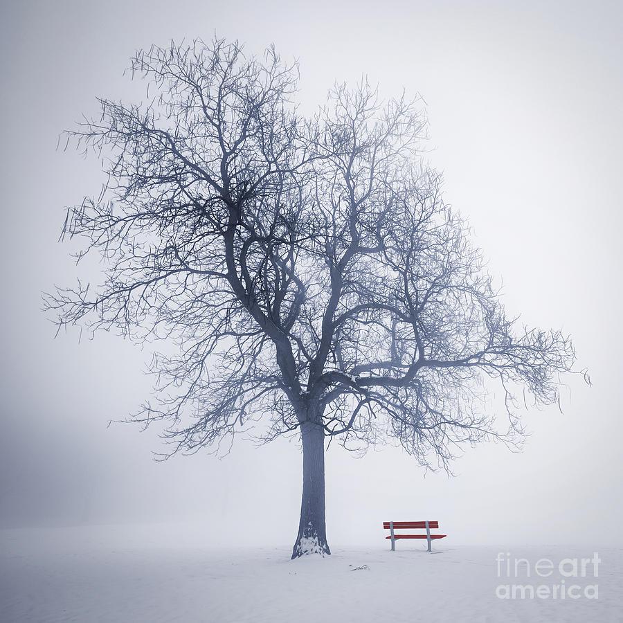 900 x 900 jpeg 157kB, Tree Photograph - Winter Tree In Fog by Elena ...