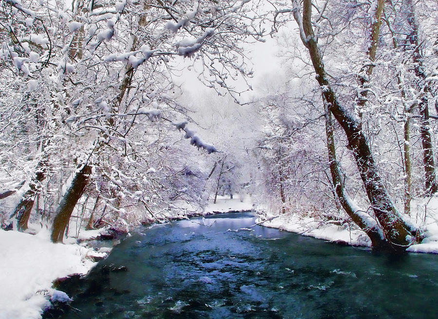 Christmas Card Photograph - Winter White by Jessica Jenney