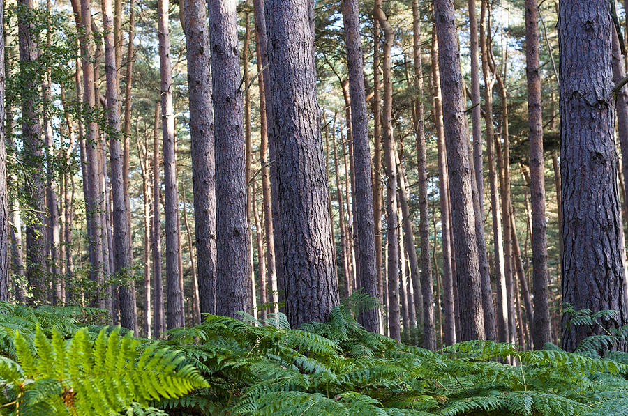 Woods Photograph