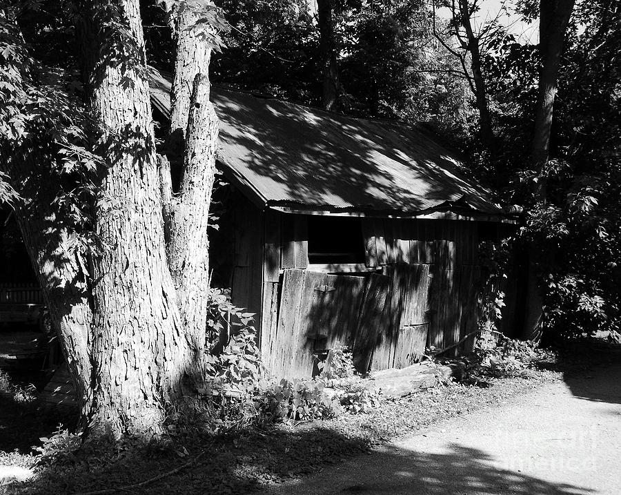 Woodshed Shadows Photograph  - Woodshed Shadows Fine Art Print