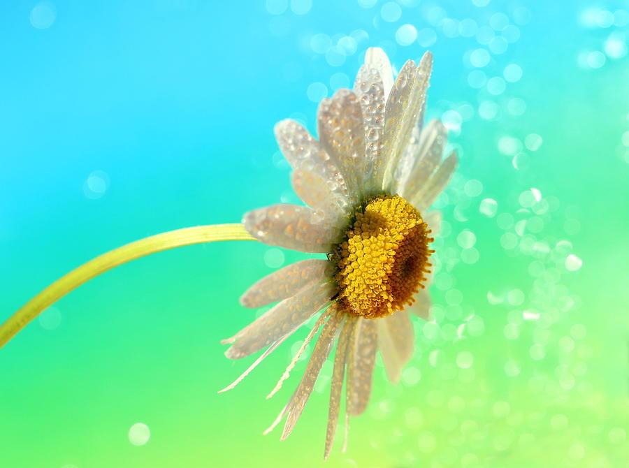 Flower Photograph - Still Life by Heike Hultsch