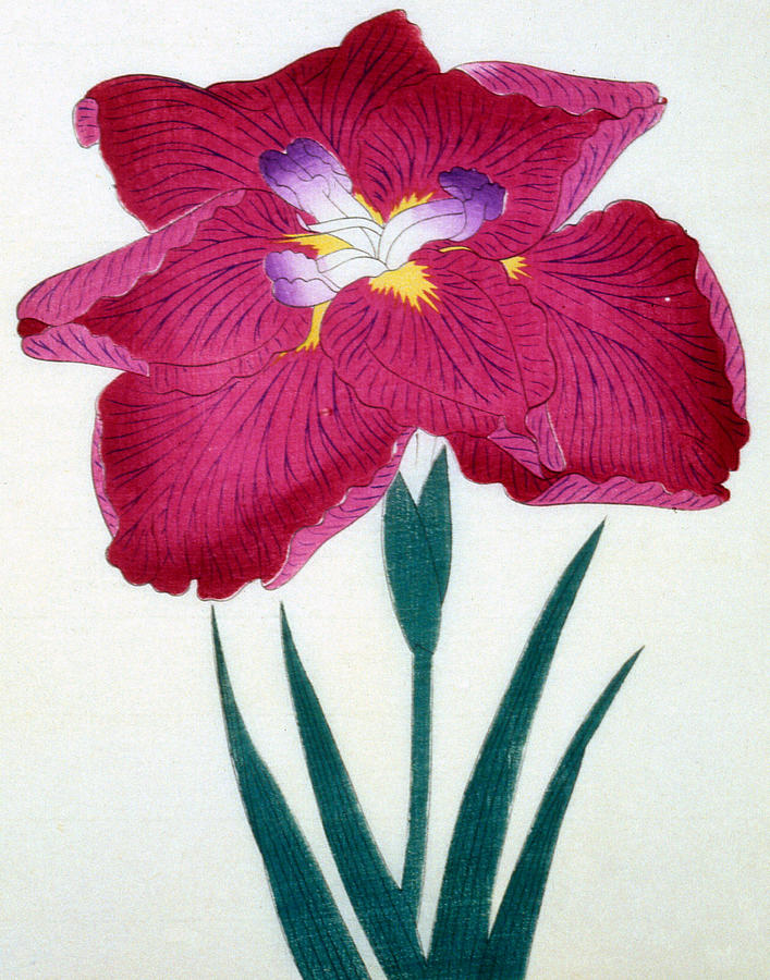 Japanese Flower Painting